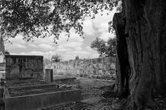 IMG_0351 (New Orleans Lady) Tags: cemeteries copyright tree grave graveyard oak all  images jordan h rights copy reserved allrightsreserved alysha cimetire c cemitrios cimetires m friedhoefe cimiteris d gng cypressgrovefiremenscemetery120cityparkavenueneworleans louisianacirca1840 20032013 allimages20032013alyshahjordan