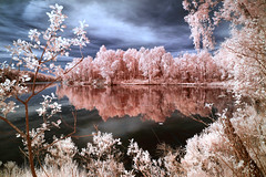 Framed Reflection (McSnowHammer) Tags: trees sky lake reflection nature landscape ir software infrared nik vstra lngvattnet