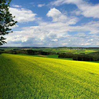 The yellow and green rapeseed of the Vulkaneifel