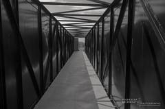 The bridge walkway in B&W (Mosport Motorsports Track) (Random Moments Photography by Sandi Graham-McWade) Tags: kids outdoor candid families ucr individuals randomimages charityevent ddsa nikond7000 randommomentsphotography sandigrahammcwade randomunusual durhamdownsyndromeassociation porscheabilities wwwrandommomentsphotographyca