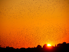 Sunset in Rome (Larterman) Tags: winner flickrduel flickrawards