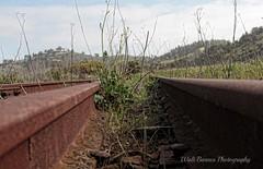 Weeds and rails Topaz (Walt Barnes) Tags: railroad santafe abandoned train canon eos rust ruins tracks rusty rail railway richmond calif weathered hdr topaz trackside 60d millerknox canoneos60d topazadjust eos60d ebparksok wdbones99