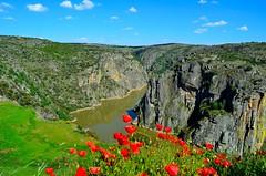 Arribes del Duero... (Alberto Fer.) Tags: ro valle paisaje montaa peninsula zamora panormica duero castillaylen arribes iberica