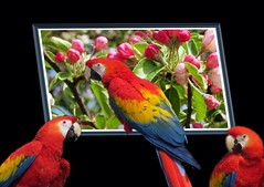 Parrots (rustyruth1959) Tags: peacetoall mindigtopponalwaysontop