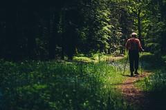 Es waren viele Pfade... (sfp - sebastian fischer photography) Tags: nature forest path natur landschaft wald wanderer pfad odenwald beerfelden