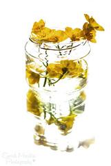 13th May - Mirror (sminchin1977) Tags: mirror ethan jar buttercups mayphotoadaychallenge fmsphotoaday