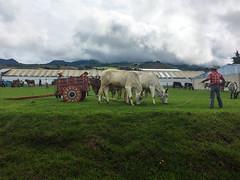 "Tierra Blanca: foire aux bestiaux <a style=""margin-left:10px; font-size:0.8em;"" href=""http://www.flickr.com/photos/127723101@N04/26993448361/"" target=""_blank"">@flickr</a>"