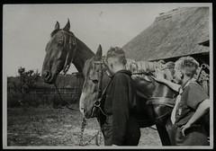 Archiv E794 Pfadfinder, 1950er (Hans-Michael Tappen) Tags: 1950s pferd junge jungen pfadfinder kluft hemd halstuch pferdegespann zaumzeug 1950er bursche scheuklappe archivhansmichaeltappen