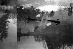 Multiple Exposure (joshuapaynesmith) Tags: bw toronto film 35mm highpark multipleexposure noireetblanc filmisnotdead