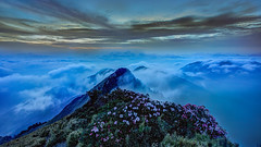 Floral Sunset Above Clouds  (Sharleen Chao) Tags: sunset color misty night canon nationalpark spring cloudy taiwan   bluehour hdr  cpl afterglow  nantou  1635mm  mainpeak    mthehuan rhododendronpseudochrysanthumhayata 5dmarkiii taiwanalpinerhododendron