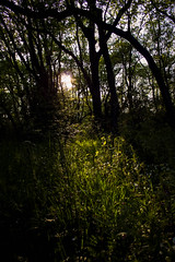 Spring sunset (gina.nicole.tesloff) Tags: spring sun summer sunset sunlight ray grass forest enchanting england woodland wildlife woods walking open efflorescence reflection romantic travel trees underfoot undergrowth uk outdoors yellow sky shadow dark green glow home light leaf landscape leaves canon colour contrast colourful view beautiful bright nature natural