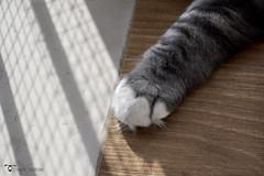 _DSC772101 (chiaratrevisan68) Tags: cats sun nuvole cielo sole gatto domestici animali zampa siberiano