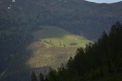 DSC_4907 (d90-fan) Tags: sun animals outdoors austria tiere sterreich natur sonne sonnenstrahl rauris hohetauern tauern krumltal raurisertal