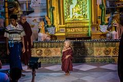 Little shy monk (ReinierVanOorsouw) Tags: reizen myanmar birma burma travelling travel travelstoke reiniervanoorsouw sony sonya7r sonya7rii a7rii asia asya azie yangon yangoon rangon rangoon shwedagon shwedagonpagoda pagoda