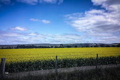 Neon View (mrlosgutierrez) Tags: road sky green nature grass clouds photography countryside flickr neon paradise skies glow view ar random perspective relaxing samsung australia victoria note galaxy refreshing geelong note4