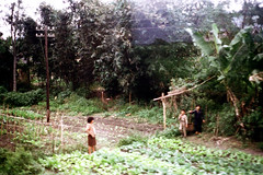 32-119 (ndpa / s. lundeen, archivist) Tags: winter people color fall film field rural 35mm countryside village nick working taiwan powerlines 1970s 1972 utilitypole hualien 32 taiwanese eastcoast dewolf rurallife aboardatrain travelingbytrain republicofchina onatrain easterncoast viewfromatrain easterntaiwan nickdewolf photographbynickdewolf hualiencounty ridingonatrain reel32 viewfromapassingtrain takenfromaboardapassingtrain