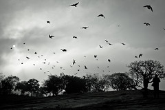 Azadiayan (pankaj.anand) Tags: morning birds early bangalore bagh 2012 lal azadiyaan
