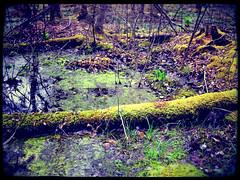 Fallen Trees, 2012/03/25