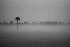 DSC_0058 (pradyisgreat) Tags: lighting camera light india mist tree fog wonderful photography photo amazing nikon focus exposure photographer vibrant sigma best photograph lone mm pradeep 70300 sekar prady d3100 pradeepsekarphotography