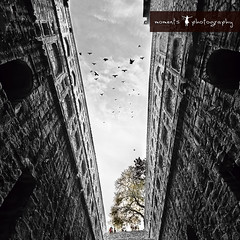 as i looked up.. (PNike (Prashanth Naik..back after ages)) Tags: sky blackandwhite bw india tree up birds clouds stairs climb nikon asia delhi pigeons capital dramatic well ki newdelhi baoli agrasenkibaoli agrasen d7000 ugrasenkibaoli pnike