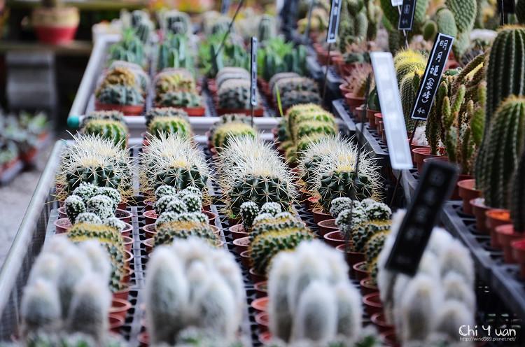 台北花卉村-多肉植物04.jpg