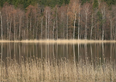 The Spring (markku mestila) Tags: finland sailsevenseas fleursetpaysages