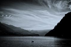 Walensee (ontourwithben) Tags: white black alps schweiz switzerland swan swiss schwan weiss schwarz walensee churfirsten walenstadt mygearandme