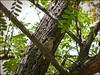 Getting ready for 'camouflage'... (Mike Goldberg) Tags: tree birds jerusalem bark camouflage sparrow blendin mikegoldberg panasonicfz35 illustratingaconcept