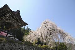 20120424 Hagiwara 8