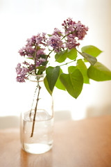 Lilacs (Julie Lavelle) Tags: wood city flowers light toronto flower colour green window water glass leaves spring natural bright bokeh mason 85mm fresh lilac jar buds 18 2012 canoneos5dmark