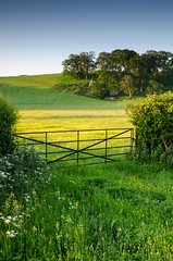Pasture at Dawn (Bob Small photography.) Tags: uk trees england west castle field sunrise landscape countryside gate somerset dunster westcountry buttercups westsomerset dunstercastle nikond7000