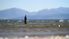 aIMG_0839 (paddimir) Tags: bay scotland isle bute rothesay scalpsie