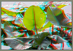 Blairs Pond Foliage (starg82343) Tags: lake reflection green nature water bug insect de outside outdoors spider stereoscopic 3d pond critter anaglyph foliage stereo stems milford delaware creature depth lillypads stereoscopy stereographic waterplant creepycrawler brianwallace waterspider