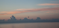 dive (jajajavi75) Tags: ocean bird beach sunrise dive plummet hollywoodbeach birddiving