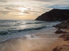 Gray Whale Beach