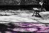 Indicios (KARNATION) Tags: primavera bench spring banco purpura lamanoamiga karnation jardinbotanicozaragoza