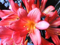 Einen sonnigen Sonntag (Heide (vorher roeschen56)) Tags: flowers blumen masterphotos takenwithlove lovelyflickr