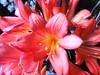 Einen sonnigen Sonntag (Heide56) Tags: flowers blumen masterphotos takenwithlove lovelyflickr