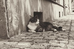 Siesta (***toile filante***) Tags: street city bw sunlight animal cat stadt siesta sw katze emotions tier gefhl sonnenlicht strase