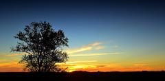 Atardece en El Cardal (Eduardo Amorim) Tags: sunset southamerica argentina atardecer tramonto sonnenuntergang prdosol ayacucho poniente anoitecer coucherdesoleil entardecer crepsculo amricadosul poente amriquedusud provinciadebuenosaires sudamrica suramrica amricadelsur sdamerika buenosairesprovince solanet americadelsud americameridionale eduardoamorim elcardal