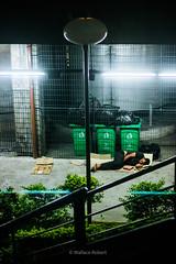 Letargia (Wallace Robert dos Santos) Tags: life street camera light brazil streets verde love robert luz brasil night composition canon de focus photographer metro action amor homeless plan social ação beggar human vida wallace noite mission hiker rua recreation plano framework paulo dslr lixo trem sao job humano são trabalho lazer mendigo pedinte fotografo câmera exposição conceição estação andarilho pobreza longa foco miséria fria fotojornalismo composição desigualdade missão morador situação enquadramento