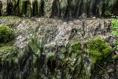 foto 148 (patrivivesm) Tags: naturaleza mountain musgo verde green nature wet water outdoors waterfall moss agua nikon exterior 365 monte montaa cascada humedo 365project nikonist nikonista proyecto365