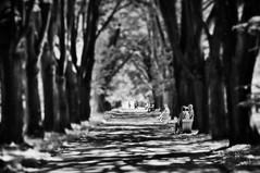 Oak Avenue -  my favorite place - HBM :-))) (eggii) Tags: park bw bench mono monday