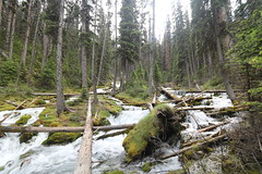 Karst springs Alberta Canada (davebloggs007) Tags: lake up for day walk great trails it well springs short only worth but sure past karst a watridge