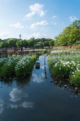 4Yamada Pond Park (anglo10) Tags: flower japan