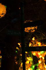 _DSC9527_2 (Elii D.) Tags: light fish flower animal night zoo monkey neon dragons lantern lampion dargon
