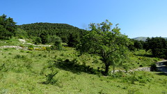 L't, la verdure, un noyer, le silence.....ambiance vacances (bernard.bonifassi) Tags: bb088 06 alpesmaritimes 2016 thiery counteadenissa arbre noyer campagne paysage