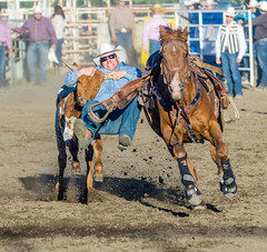 True Grit ... (the teeth that is) (D.Spence Photography) Tags: horses canada animals danger outside cowboy pentax country lifestyle bulls western cowgirl prairies extremesport 2016 innisfailprorodeo