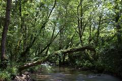 Rio Uma (jorge.cancela) Tags: trees espaa naturaleza nature water rio river spain agua europa europe long exposure uma galicia galiza pontevedra condado salvaterra