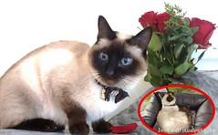 Sat, Jun 25th, 2016 Lost Male Cat - Naas, Monread, Kildare (Lost and Found Pets Ireland) Tags: june cat lost kildare naas 2016 lostcatnaaskildare